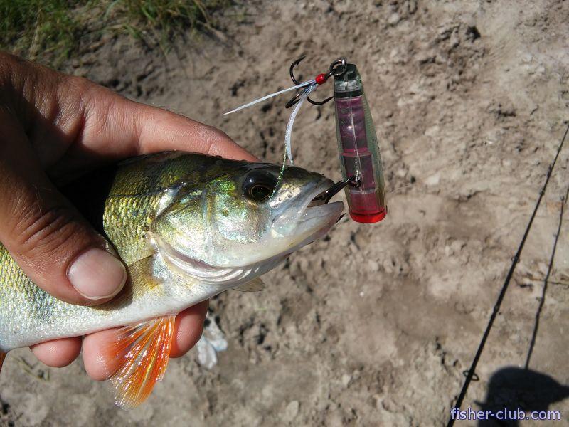 рыбалка в кременчуге отчеты