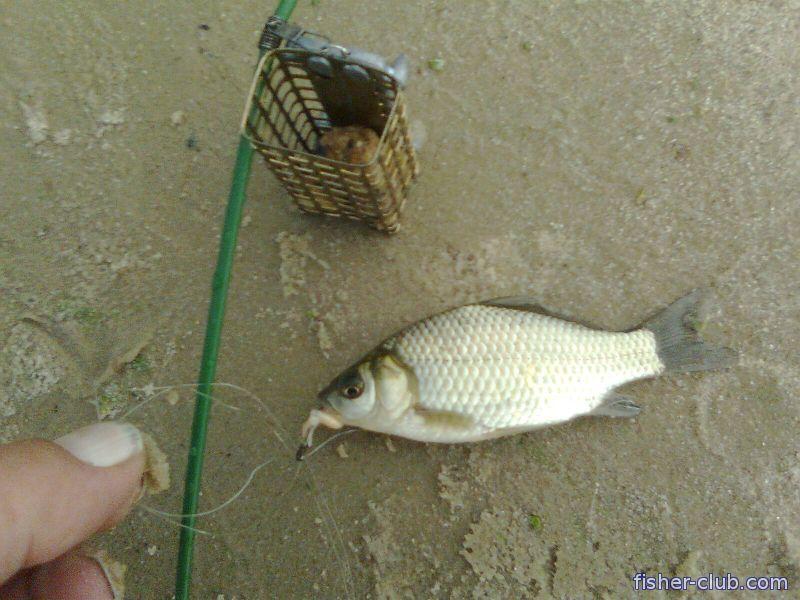 гороховая каша на рыбалку для кормушки