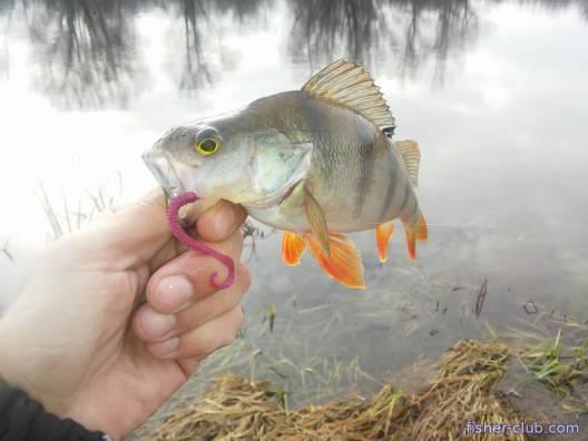 ловля рыбы в кременчуге