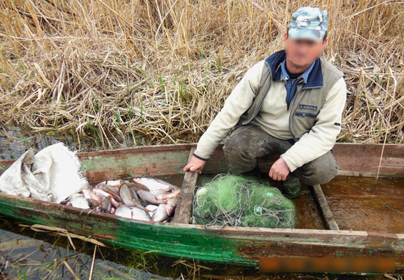 трое рыбаков поймали 60 окуней