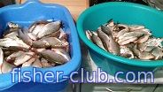 fisher-club.com